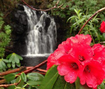 Dunvegan-Castle-Water-Garden-waterfall