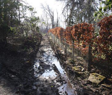 Garden Path Upgrades  (12)
