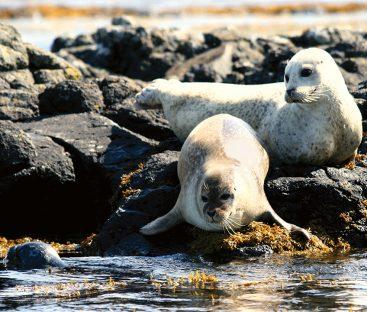 SEALS12