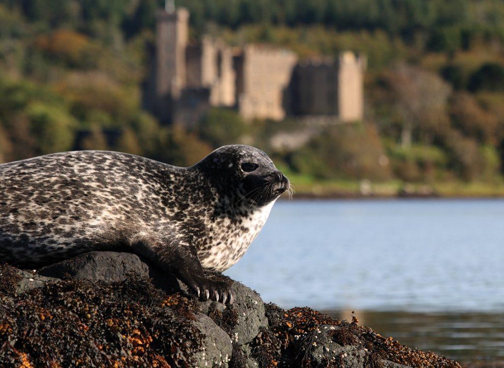 Seal Trips Dunvegan