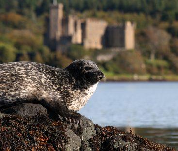 Seals17