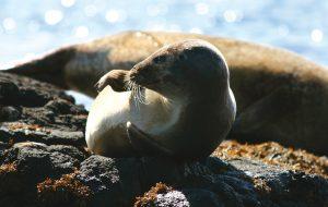 Seals6