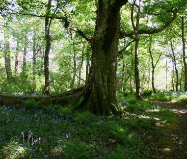 Woodlands1
