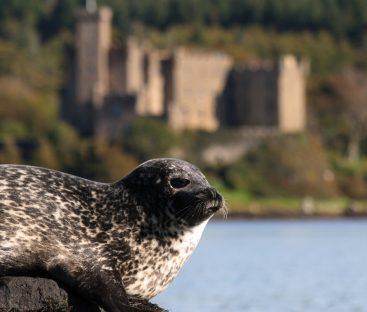 seal trips