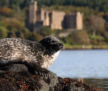 Dunvegan Castle Library Pics (5)