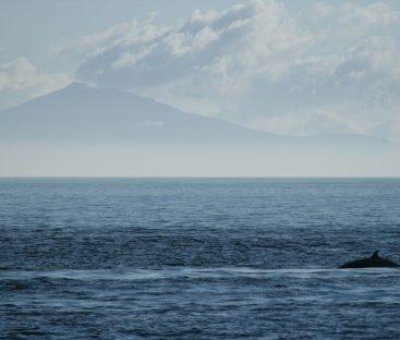 Whale Neist Point3b