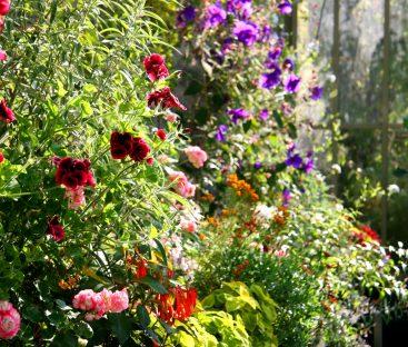 gardens (107)a